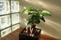 観葉植物の癒し効果 まとめ。お部屋で手軽に森林浴気分