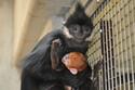 神奈川県・よこはま動物園ズーラシアで金色の赤ちゃんが誕生
