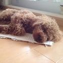 愛犬が寝ながらムニャムニャ……。犬も「寝言を言う」ことがあるの?