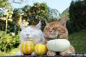 「ほっこり」猫写真が夢の競演! 猫アーティスト16組の合同写真&物販展