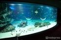 「サンシャイン水族館」が恐怖のお化け屋敷に?初のホラーイベントで鳥肌体験
