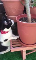 【おもしろネコ動画】小鳥と会話するネコちゃんの真意