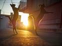 【おもしろネコ画像】夕暮れの中ダンスバトルを繰り広げる2匹のネコが芸術的