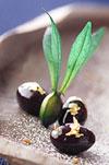 黒豆のベイクドチーズケーキのポイント・コツ3