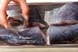 黒鯛の塩焼きの下準備1