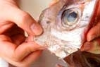 鯛の香りみそ鍋の作り方2