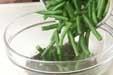 サヤインゲンのゴマ汚しの作り方1