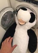 金爆・樽美酒研二 パンダのぬいぐるみを洗いたくて悶々とする