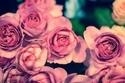 なぜか上手くいかない女子に教える、愛欲の星座占い(3/17-3/23)
