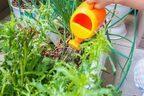 プランターで簡単♪「家庭菜園」初めてさんにおすすめの野菜とは?