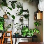 ガジュマルにポトス……観葉植物で極上のリラックスタイムをすごせるお部屋づくり