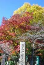 話題の高尾山♪『紅葉狩りハイキング』ひと足早く秋の山歩きデビュー心得をチェック!