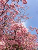 菜の花でデトックス!春の旬野菜・菜の花をつかったまぜご飯レシピ