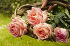 身近すぎて気づいていない最強の開運グッズ「お花」が女子力を知らず知らずにUPさせる!(その3)