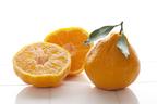花粉症予防、美肌作り、疲労回復……旬の柑橘類は毎日食べなきゃ損!