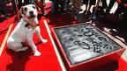 『アーティスト』の名犬・アギー、チャイニーズ・シアターに足型を残す史上初の快挙!