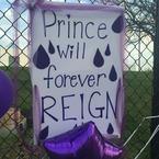 【ハリウッドより愛を込めて】 PURPLE REIGN(紫の時代)…プリンスを偲んで