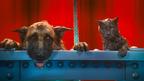 動物好き必見!キュート&ふてぶてしい犬猫が競演『キャッツ&ドッグス』特別映像到着