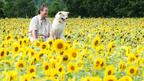 泣ける! 31万部突破の漫画「星守る犬」が西田敏行主演で映画化