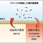 理研、腸内細菌叢と免疫系の間にある双方向制御機構を発見