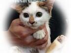 東京都豊島区で、228匹の可愛い猫たちの里親を募集中