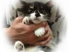 東京都・豊島区の保護団体が子猫152頭、成猫73頭の里親を募集中