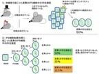 iPS細胞で観察されるゲノムの点突然変異はiPS化初期に発生したもの -放医研