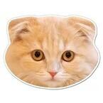 猫の顔面が磁石になった! 「猫の顔マグネット」が話題に