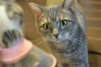 「ご飯を盗めないとわかった瞬間のうちの猫の顔」