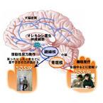 金沢大、ナルコレプシーの症状を抑制できる神経メカニズムを解明