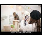 東京都・大塚の保護猫カフェで、猫の撮影会開催