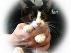 東京都豊島区で202匹の猫の里親を募集中