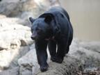 東京都・上野動物園で「大人の遠足」が開催!