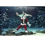 水中からメリークリスマス! 東京都・サンシャイン水族館の水槽にサンタ登場