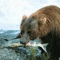 規格外の大自然映像、一挙放送! 「熊が扉をノック」など撮影は死と隣合わせ