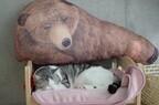 一見本物のようなクマの人形を見ると、猫はどう反応するのか