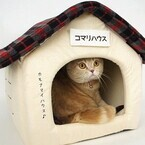 猫・犬の家に貼るペット用表札が販売中