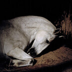 東京都・竹芝にて墓地で働く馬を捉えた写真展 -人と動物の共存関係がテーマ