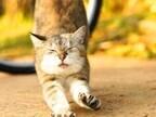東京都目黒区で、猫の虐待や不審死などの解決シンポジウムが開催