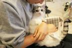 「自分を抱っこしてるのが飼い主でないと気づいた瞬間のうちの猫の顔」