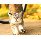 東京都目黒区で野良猫の虐待などの問題を考えるシンポジウムが開催