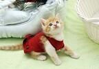 猫が布団でおしっこをしてしまう場合の対処法を獣医師が解説