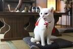 北村一輝主演『猫侍』、第2弾ドラマ&映画製作決定!「想像を超える変化球」