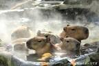 カピバラの露天風呂に「グレープフルーツ湯」が登場!