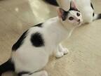 東京都豊島区で、125匹の可愛らしい猫の里親を募集中