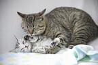 猫はなぜ喉をゴロゴロ鳴らすのか - 獣医師が解説