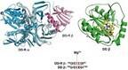 岡山大、ビタミンB12関与酵素の「再活性化分子シャペロン」の仕組みを解明