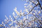 東京都・虎ノ門ヒルズに、地上250mの「お花見ガーデン」がオープン
