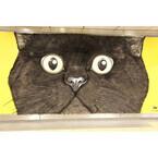 東京都・渋谷駅にモフモフの巨大クロネコが出現! 期間限定で触り放題