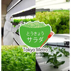 東京都メトロ東西線高架下で育った「とうきょうサラダ」発売--安定栽培可能